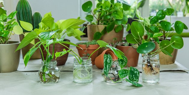 Skořice urychlí vykořenění rostlin.