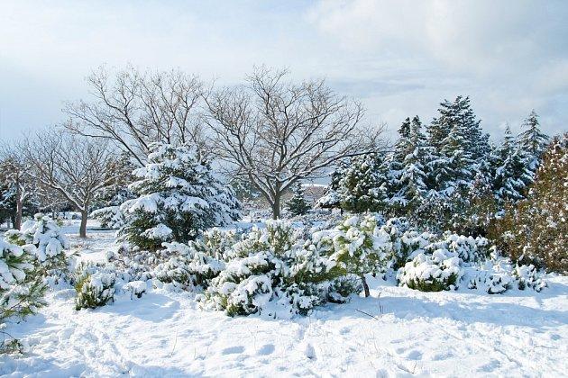 Díky stálezeleným rostlinám je zahrada atraktivní i v zimě.