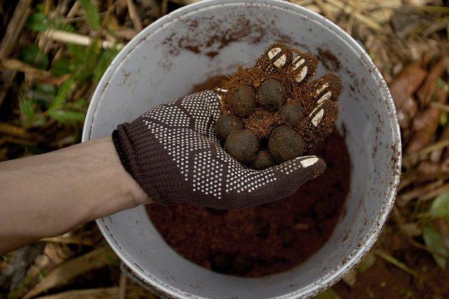 Výroba seed bombs je dobrá zábava pro dospělé i pro děti.