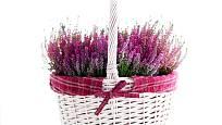 Růžovo-fialový vřes nebo vřesovec vynikne v bílém košíku.