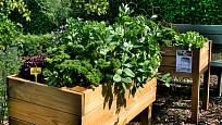 Rostlinám podobných nároků se ve větší, prostornější nádobě pospolu daří