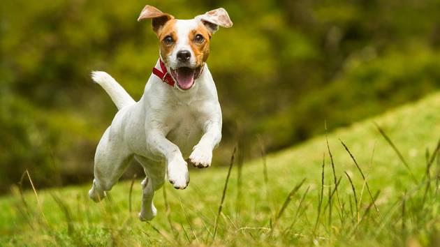 Pro většinu páníčků je dnes naprosto klíčové, aby s nimi byl jejich pes šťastný
