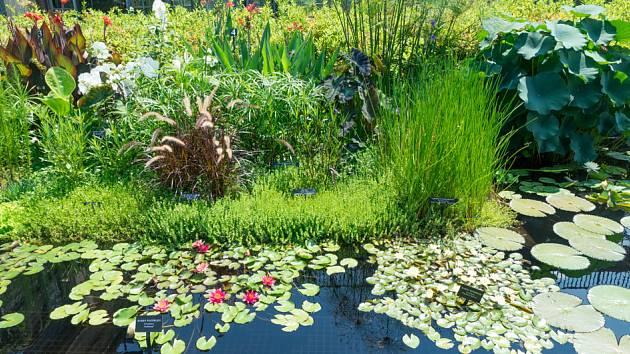 Vodní a bahenní rostliny zdobí jezírko a čistí vodu