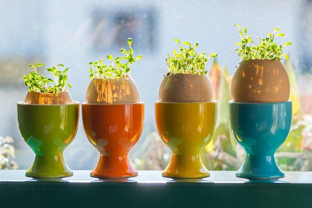 Řeřicha může být i dekorativní - nejen na Velikonoce.