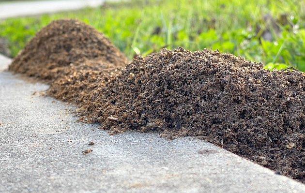 Vsypte prášek do pečiva přímo do mraveniště.