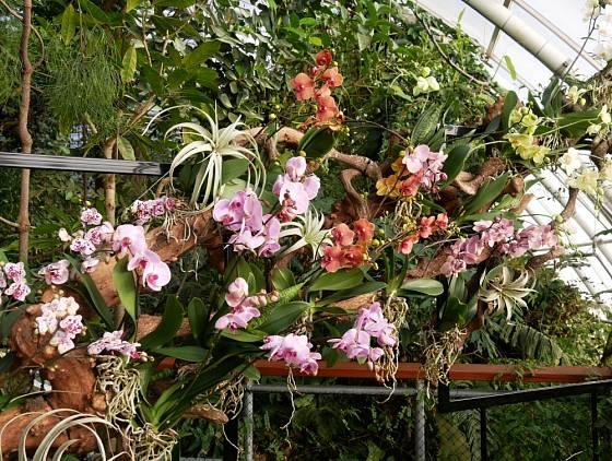 Skleník Fata morgana je v březnu plný orchidejí.