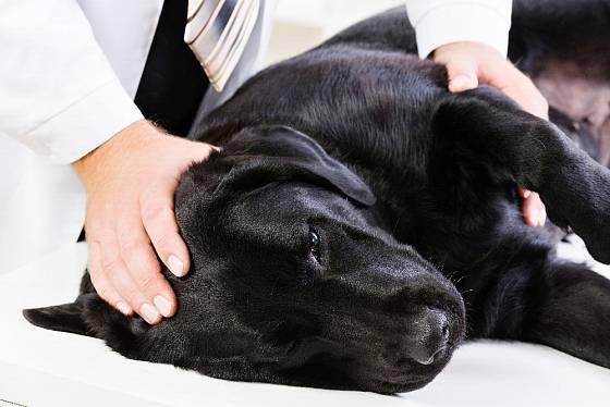 Diagnózu onemocnění vašeho psa nechejte na profesionálovi a navštivte veterinárního lékaře.