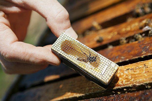 Vkládání nové matky do úlu