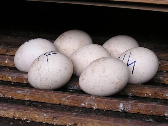 označená vajíčka