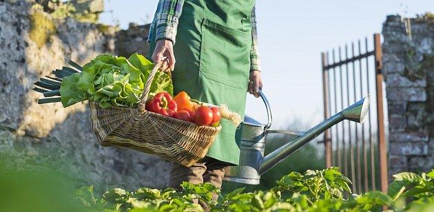 Sklizeň je zasloužená radost pěstitele