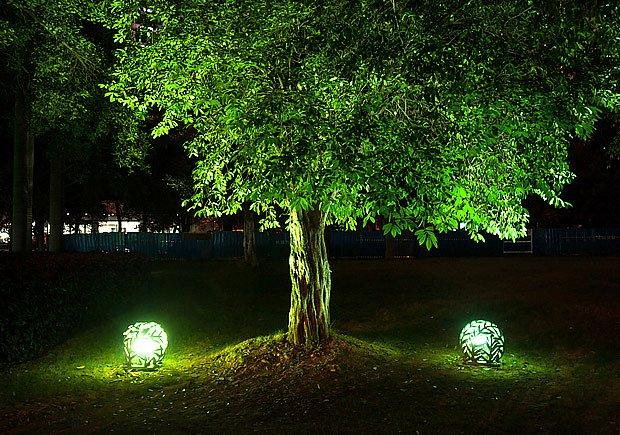 Zdola osvětlený strom