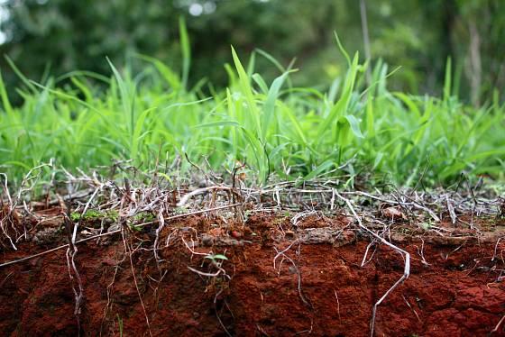 Pohled do nitra trávníku, suché části brání příjmu vláhy a živin.