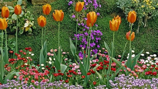 Cibuloviny lze krásně kombinovat s dvouletkami, například tulipány se sedmikráskami