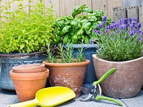 Na jaře se každý těší na čerstvé, ale než se objeví na záhoně, můžeme je pěstovat doma