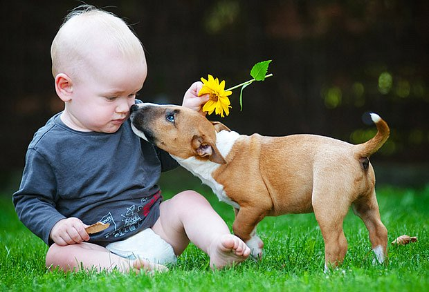 Na děti i štěňata je třeba dávat pozor, jinak ochutnají každou druhou rostlinu