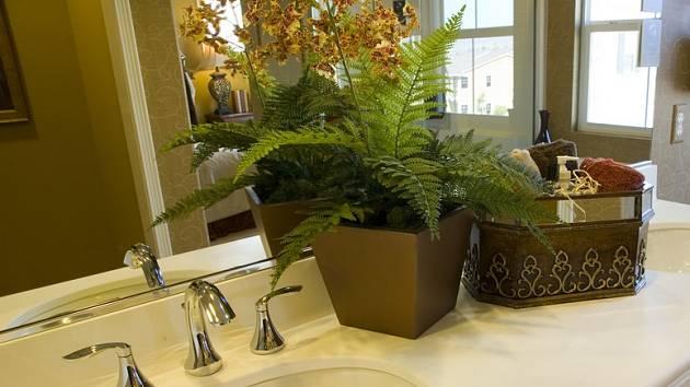 K dostatečnému osvětlené rostlin, stojících dále od okna, přispěje zrcadlo