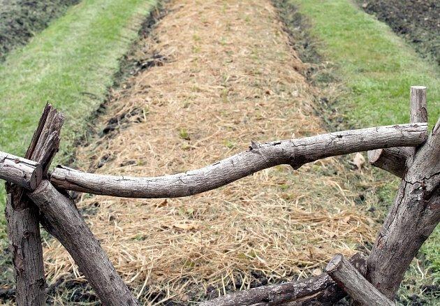 Slaměný mulč na chvíli odkryjte, aby se půda prohřála