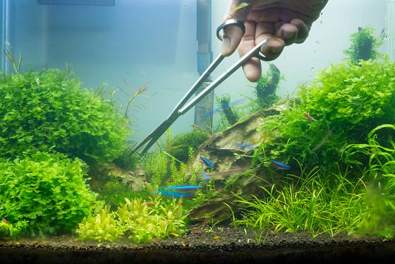 Rostliny vyžadují pravidelnou péči