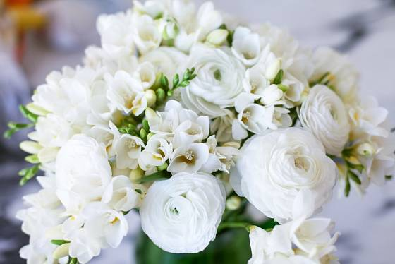 Bílé frézie se často objevují ve svatebních kyticích.