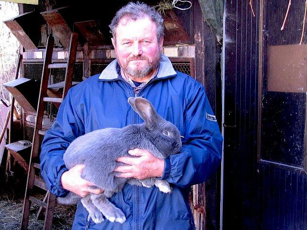 Chovatel Jan Přibyl se svým králíkem plemene modrý moravský
