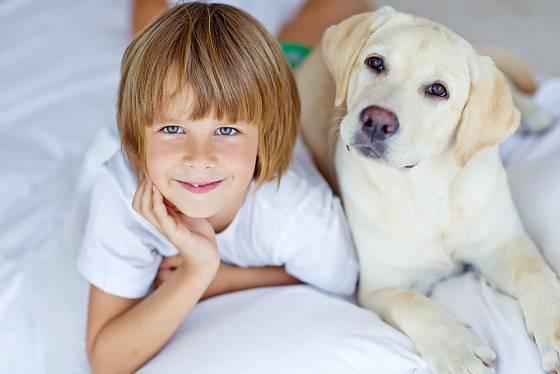 K nejvhodnějším psům pro rodiny s dětmi se řadí také labradorští retrívři.