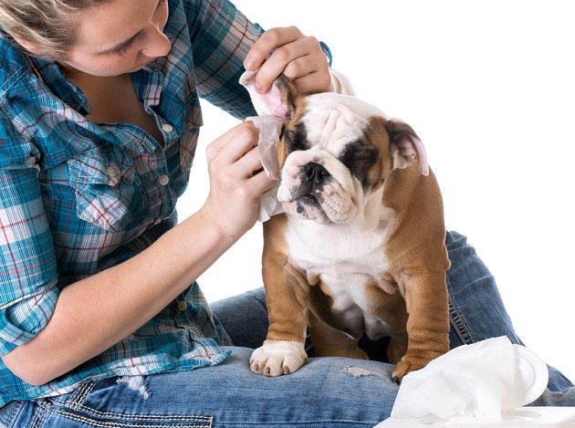 Naučte svého psa včas dobře snášet kontrolu uší.  Je to dobrá prevence zánětů.
