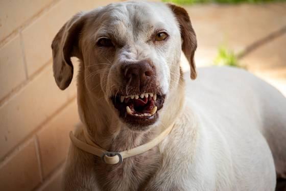 Psi necení zuby bezdůvodně.