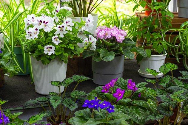 Někteří z nás vítají ve svém interiéru spíše kvetoucí rostliny.
