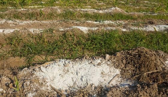 Pravidelné přidávání vápna do kompostů urychluje jejich zrání, odstraňuje zápach a likviduje hmyz.