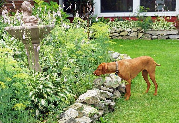 I váš pes dělá na zahradě neplechu? Běžte s ním tedy na procházku!