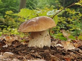 Jak a kde teď rostou houby