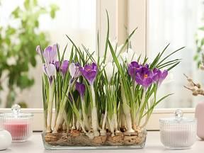 Máme pro vás pár tipů, jak si zkrátit dlouhé čekání a obklopit se jarem mnohem, mnohem dřív