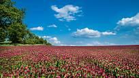 Jetel je zelené hnojení pro půdu