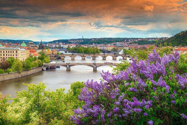 Počátkem května obvykle v Praze bohatě kvetou šeříky.