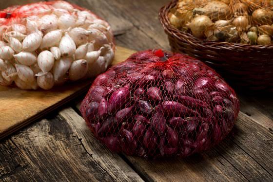 Cibule sazečka se prodává na váhu, někdy už bývá předem zabalená v síťce.
