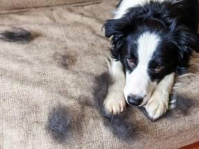 Zvířecí chlupy jsou náročné na úklid. Víte, jak na ně?