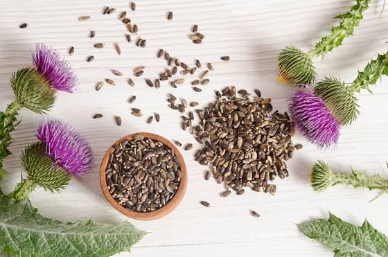 Léčivá semena