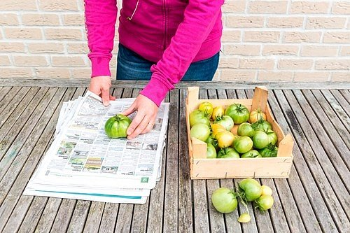 Zelené či načervenalé plody, naskládejte nejlépe v jedné vrstvě do dřevěné bedýnky nebo papírové krabice a přidejte k nim několik jablek.