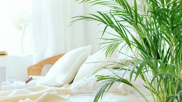 Dopřejte si u vás doma exotiku s palmami.