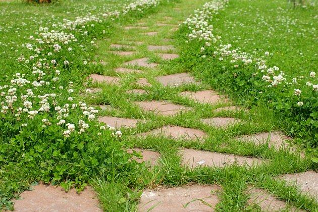 Zatímco pro někoho představuje jetel v trávníku pohromu, jiní z něj mají radost.