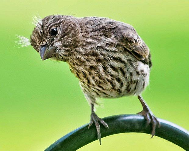 Mláďata jsou zvědavá, ptačí nevyjímaje