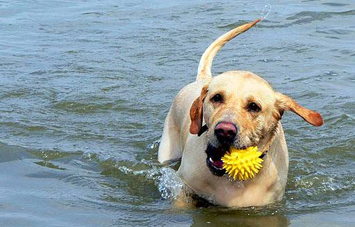 plavoucí míček