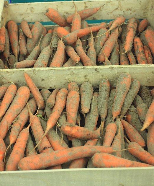 Mrkev a další kořenová zelenina se nejlépe skladuje v písku.