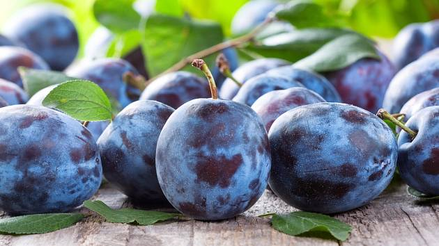 Švestky patří mezi oblíbené ovoce s mnoha možnostmi využití.