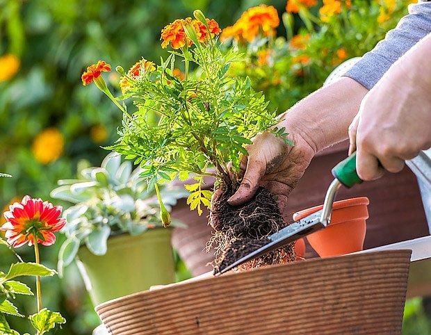 názorné fotografie o zahradničení