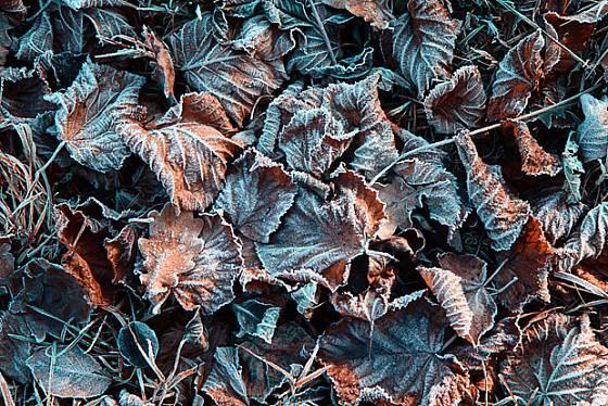Listí je nejpřirozenější izolace. Svědčí ale jen trvalkám snášejícím vlhko