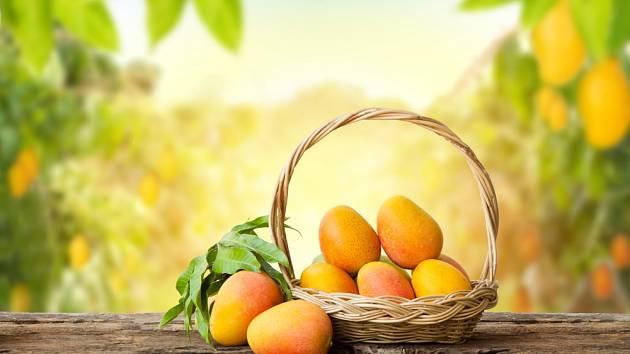Mango je v dnešní době na pultech obchodů vidět běžně