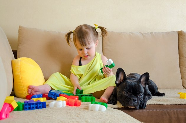 I malé dítě je nutné poučit, jak se má ke psu správně chovat. (Francouzský buldoček na snímku)