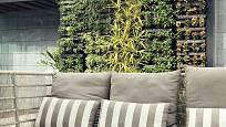 Zelené rostliny doma zlepší náladu i zdraví