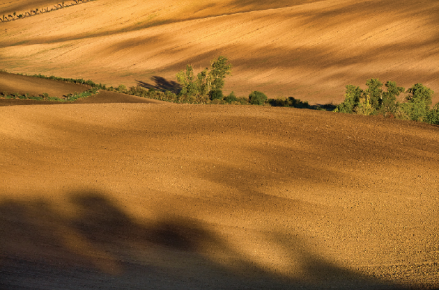 Barva země, hlíny, kůry stromů – hnědá je zemitá barva